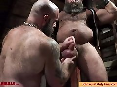 MUSCLE BULL PLAY IN THE Basement