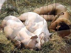 Videoclip - Disliker Pigs