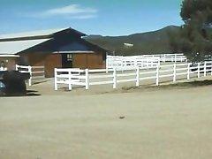 My Barn My Rules