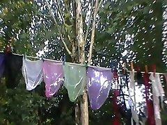 nylon panties
