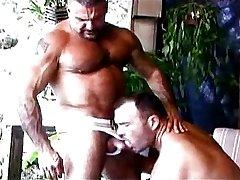 big Musclebears